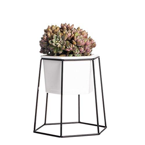 Venus Terrarium (ncyp Home Desktop Geometrische weiß Keramik Blumentopf Dekoratives Pflanzgefäß mit Schwarz Eisen Rack Metall Halterung für Succulents Kräuter Kaktus Kunstpflanzen)