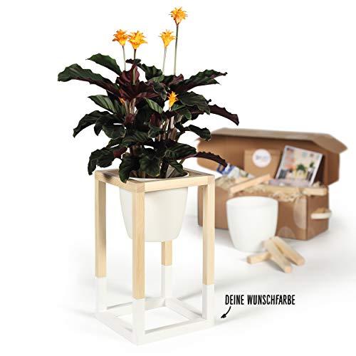 CREATE! by OBI DIY Pflanzständer, klein | Dekorativer Pflanzenständer aus Holz zum Selberbauen (HINWEIS: Farbe im Set nicht enthalten)