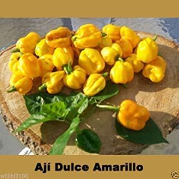 Fash Lady 20 Samen - Aji Dulce Amarillo, PEPPER Samen (C. chinense) aus Venezuela