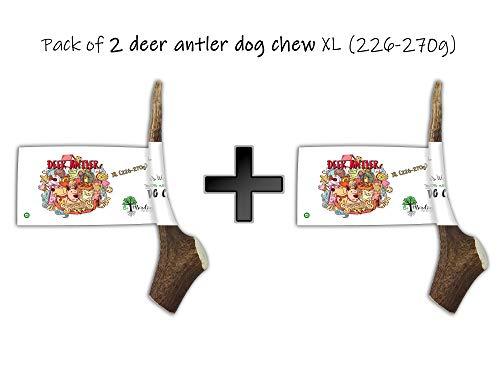 Bio Mordiscos Pack mit 2 Hundespielzeug kauspielzeug aus Hirschgeweih XL (226-270g) für Hunde - 100% natürlich