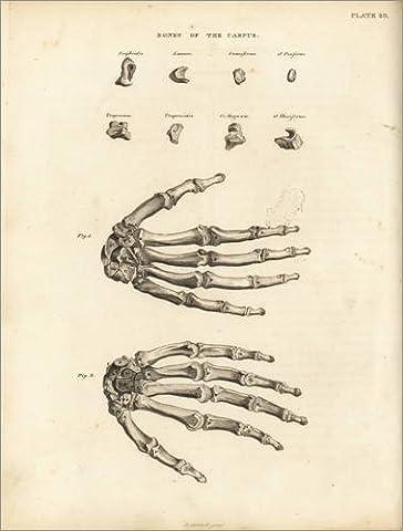 Forex-Platte 30 x 40 cm: Die menschlichen Hand von Fotofinder.com