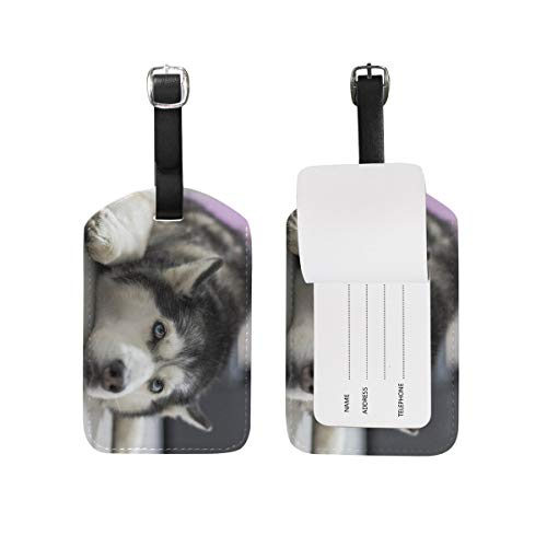 Blue Viper Curious Husky Lying PU Leather Luggage Tags Personalized 1 Piece Set