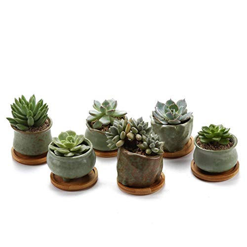 Rachel's 6.5-7CM Pots de Cactus avec Plateau en Bambou Pot pour Fleur Succulent Jardinière Collection Printemps Série NO.6 Cultiver 1 Paquet de 6 Décoration de Maison Chambre Bureau Table