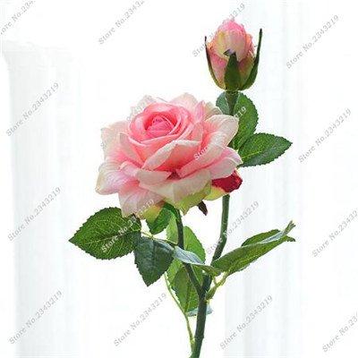 Exotique Miniature Bonsai Fleur Rose Rosas Graine Bricolage Jardin Maison Ménage et embellissant de purification d'air 110 Pcs/Sac 10