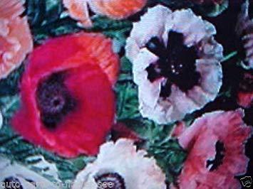 Shopvise Poppy Oriental Blend 2-4