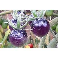 Portal Cool Indigo Blue bayas Tomate - Único, coloreado azul extraordinariamente sabroso tomate!