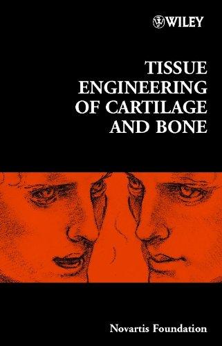 Tissue Engineering of Cartilage and Bone: No. 249 (Novartis Foundation Symposium) Knochen-gewebe
