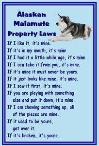 Magnetsandhangers Alaskan Malamute – Novelty Dog Fridge Magnets – Property Laws