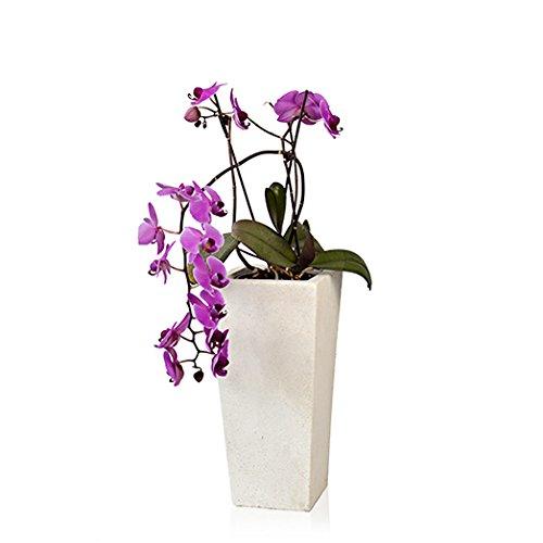 plantara-blumenkubel-blumentopf-pflanzkubel-felicia-konisch-elfenbein-19-x-39-cm