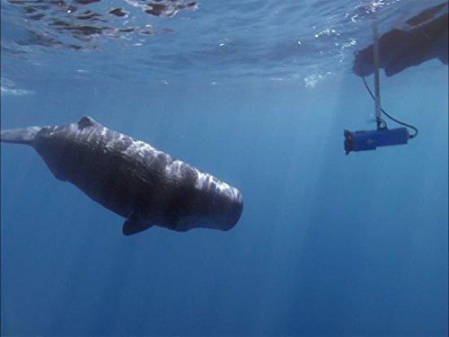 ocean-wilds-sperm-whale-oasis