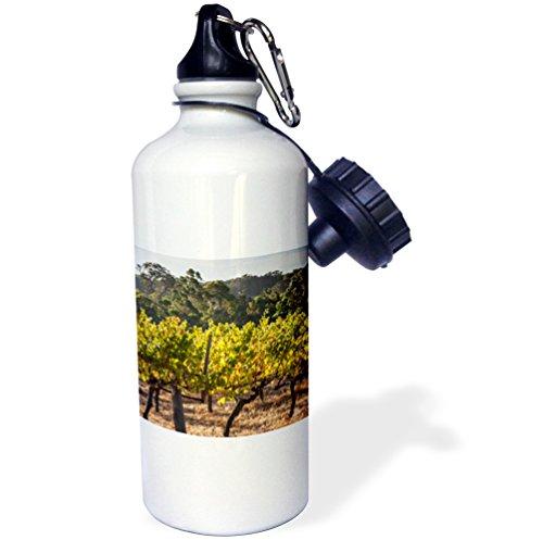 danita-delimont-australia-australia-margaret-river-vino-region-vinedo-21-oz-botella-de-agua-deportiv