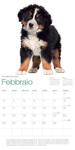Zoom IMG-2 cani calendario 2020 da muro