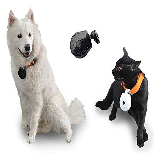 Hanbaili Cámara para mascotas, Perros Puppy Digital Black Pets Collar 480P Cam cámara Video Recorder Monitor DVR