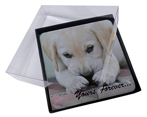 Advanta - Coaster Set 4X Yellow Lab Pup ' Yours Forever' Bild Setzer gesetzt - Lab Coaster Set