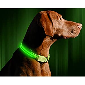Illumiseen LED Dog Collar - USB Rechargeable - Your Dog Will Be More Visible & Safe - 6 Colours (Red, Blue, Green, Pink, Orange & Yellow) and 4 Sizes - Perfect To Use With Our Matching Lead 5