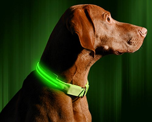 Illumiseen LED Dog Collar - USB Rechargeable - Your Dog Will Be More Visible & Safe - 6 Colours (Red, Blue, Green, Pink, Orange & Yellow) and 4 Sizes - Perfect To Use With Our Matching Lead 1