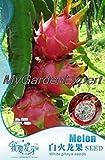 Blanco vendedor caliente 40pcs Pitaya Semillas, semillas de fruta, Semillas Bonsai Pot Embalaje original de Plantas de jardín