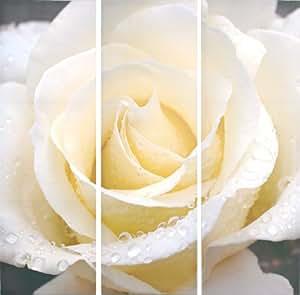 """STC Triptyque sur toile imprimée """"Rose blanche""""-Lot de 3-90 x 90 cm"""