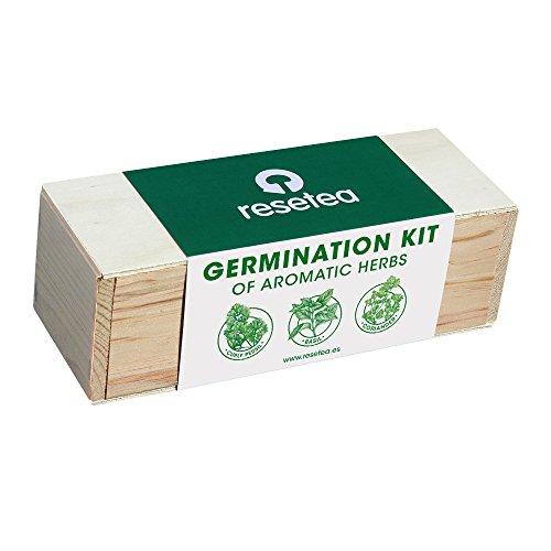Galleria fotografica Resetea - Germination Kit - Erbe aromatiche (basilico, coriandolo, prezzemolo riccio)