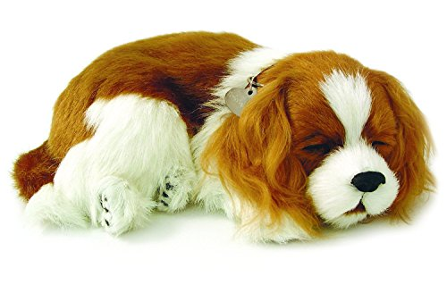 Plenty Gifts- Perfect Petzzz Soft Cavalier King Charles, 96309, Universel, Taille Unique