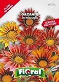 Sementi da fiore di qualità in bustina per uso amatoriale (GAZANIA IN MISCUGLIO)