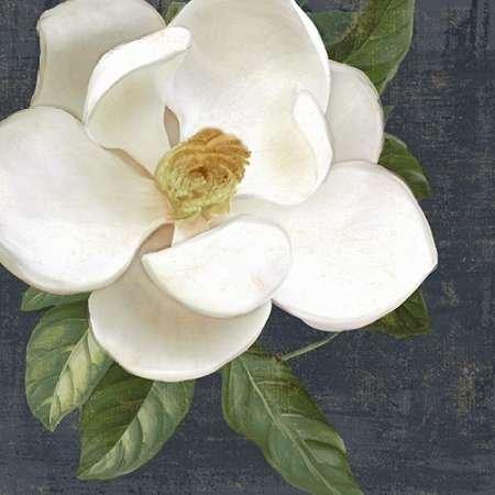 feeling-at-home-kunstdruck-weie-magnolia-2-cm60x60-poster-fuer-rahmen