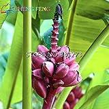 Pinkdose® 30 / bag Bananenbaum Pflanzen Obst Bonsai Seltene Kleiner Mini Hainan chinesische Bananenpflanzen Musa Bonsai Zwerg Basjoo Außen Garten * p: Burgundy