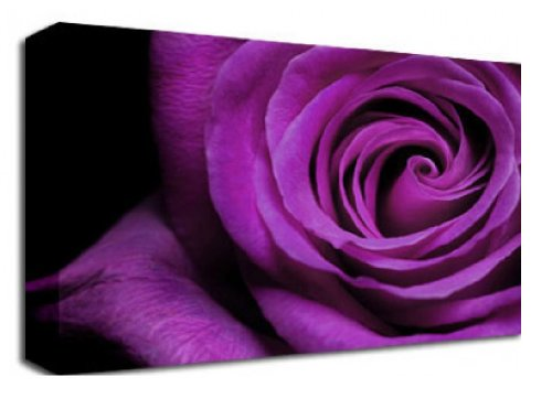 PURPLE ROSE PETALS FLORAL FLOWERS CANVAS ART PRINT 48 inch x 30 inch BOX CANVAS READY TO HANG