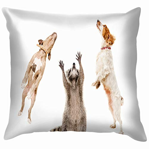 Raccoon Two Dogs Jumping Together Isolated Animals Wildlife Racoon Nature Pillow Case Throw Pillow Cover Square Cushion Cover 18X18 Inch