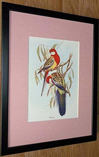 Generic J Gould Kunstdruck Vögel, gerahmt, 30,5 x 40,6 cm -