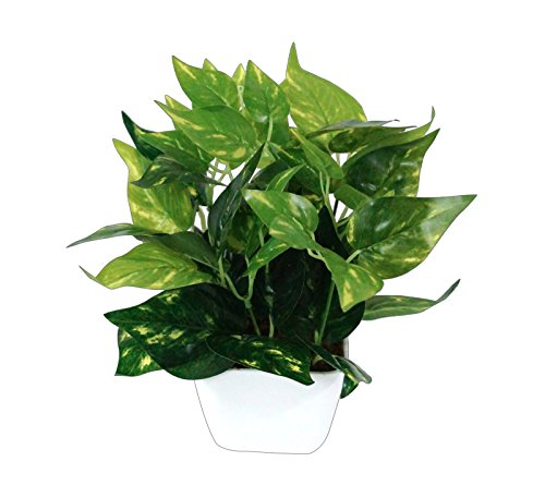 Pindia Miniature Money Plant Green Leaf Artificial Indoor/Outdoor Plant Decorative Plant For...