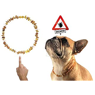 Amberdog amber necklace for dogs with rose quartz, art.no. 00518-S