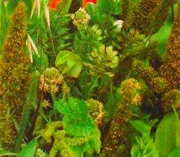 Plantes vertes Mélange de graines