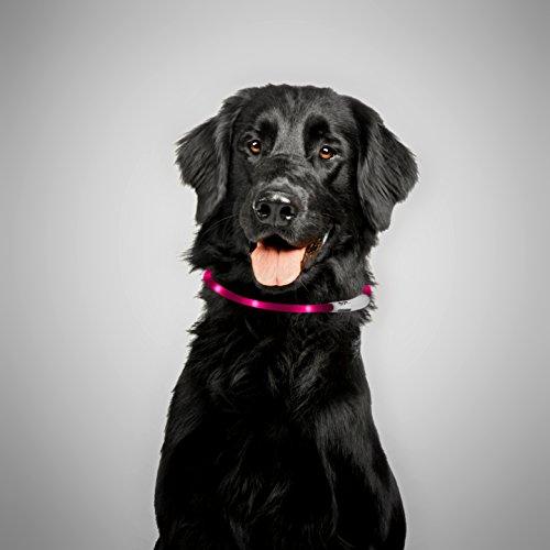 PRECORN LED USB Halsband Silikon Hundehalsband Leuchthalsband für Hunde aufladbar per USB (Größe S-L auf 18-65 cm individuell kürzbar) in pink - 2