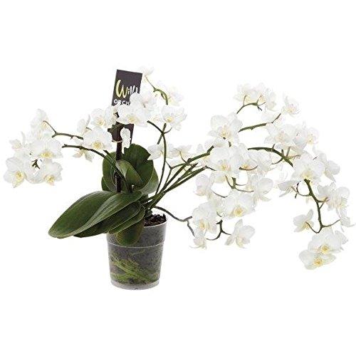 FloraStore spec-W9