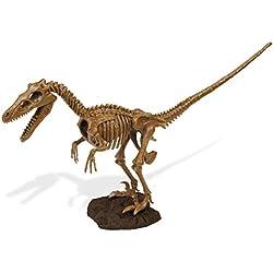 Cazadores Dr. Steve CL1501K - Paleo Expedición Kit Dino Dig: Modelo Velociraptor