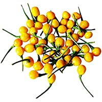 Charapita Chili, 10 Samen -Teuerste Chili der Welt- WILDCHILI