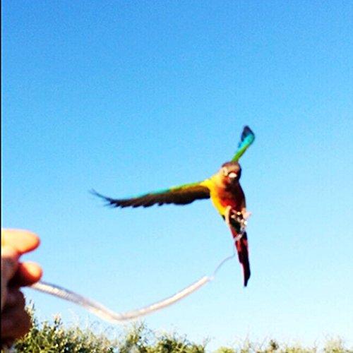 Baoblaze Vogel Geschirr Leine Bissfest Verstellbar Leine Seil mit Metallring für Vogel Papagei Training - Zufällige Farbe