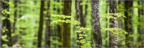 poster-90-x-30-cm-kiefernwald-von-matthew-williams-ellis-robert-harding-hochwertiger-kunstdruck-neue