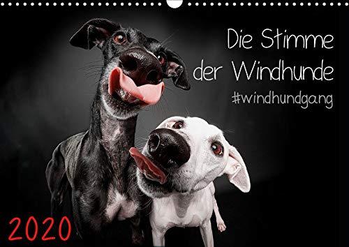Die Stimme der Windhunde (Wandkalender 2020 DIN A3 quer): Jeden Monat eine lustige Langnase (Monatskalender, 14 Seiten ) (CALVENDO Tiere)