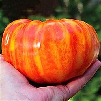 Tomatensamen Ananas Winterhalbzigarre von Madeira,Garten Bio leckere Gem/üsetomaten Gem/üse Saatgut mehrj/ährig winterhart Tomaten Xianjia Garten 50