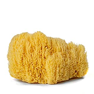 Handover : Natural Sea Sponge : Extra Large Approx. 6.5- 7 in