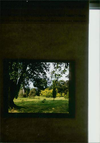 Fotomax Vintage Photo of A Panoramic View of Different Trees in Suffolk Ickworth House. -