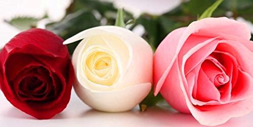 Promotion de perte !!! de 200pcs/sac couleur rose rare graines arc-en-noir bleu rose maison jardin plante vivace fleur graines de bonsaï exotiques mélange