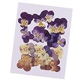 Descripción:               - Las flores prensadas son flores secas reales y selladas herméticamente;        - Formas y colores de flores bien conservadas;        - Excelente material para proyectos de bricolaje.        - Perfe...