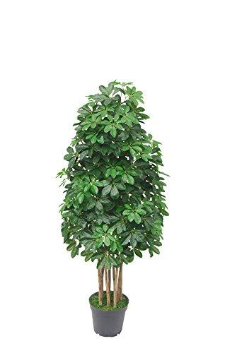 PASAMO 07542 Schefflera 155cm Künstliche Pflanze mit Echtholzstamm