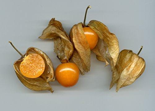 Physalis pruinosa, Ananaskirsche, schmackhafte Beeren, schnellwachsend, 10 Samen, von unserer ungarischen Farm samenfest, nur organische Dünger, KEINE Pesztizide