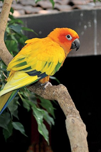 Sun Conure Parrot Journal: 150 page lined notebook/diary (Conure Sun Parrot)