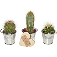 The Flower Rooms - Cactus Selection - Gift Set