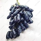 VISTARIC 7: Goldfinger Traubenkern Perennial Rebe Herb Sukkulenten, saftig Non-GMO-Frucht-Gemüse-Samen und Balkon Garten 50 PC-7
